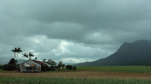 Cane Fields Near Innisfail